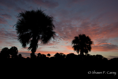 Sunrise at Myakka Rivere State Park.